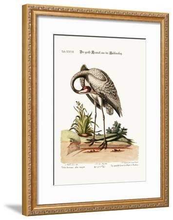 The Hooping-Crane from Hudson's Bay, 1749-73-George Edwards-Framed Giclee Print