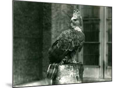 A Crowned Eagle at London Zoo, June 1922-Frederick William Bond-Mounted Photographic Print