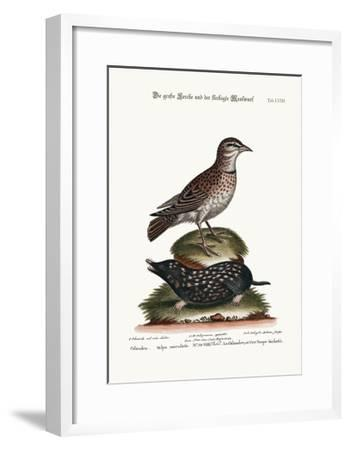 The Calandra, and the Spotted Mole, 1749-73-George Edwards-Framed Giclee Print