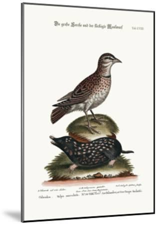The Calandra, and the Spotted Mole, 1749-73-George Edwards-Mounted Giclee Print