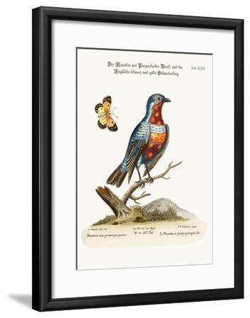The Cock Purple-Breasted Manakin, 1749-73-George Edwards-Framed Giclee Print