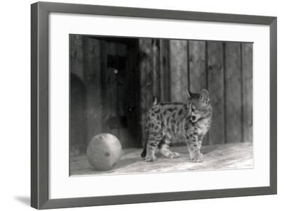 Leopard Cub with a Ball-Frederick William Bond-Framed Photographic Print