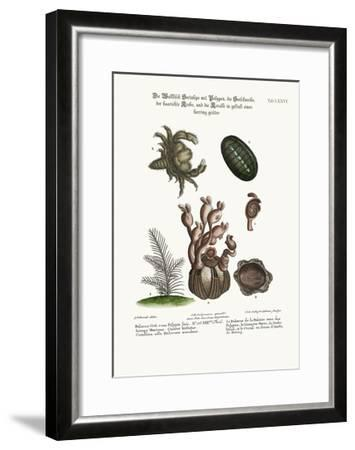 The Balanus of the Whale with Polypes-George Edwards-Framed Giclee Print