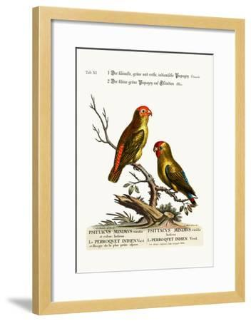 The Smallest Green and Red Indian Paroquet. the Small Green Parrot of East India, 1749-73-George Edwards-Framed Giclee Print