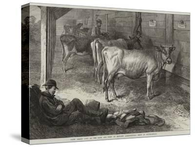 Prize Jersey Cows at the Bath and West of England Agricultural Show at Southampton-George Bouverie Goddard-Stretched Canvas Print