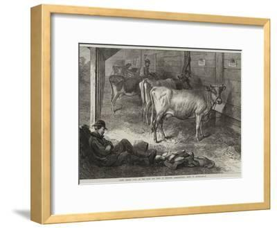 Prize Jersey Cows at the Bath and West of England Agricultural Show at Southampton-George Bouverie Goddard-Framed Giclee Print