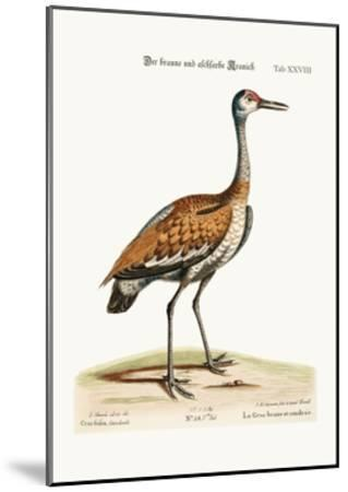 The Brown and Ash-Coloured Crane, 1749-73-George Edwards-Mounted Giclee Print