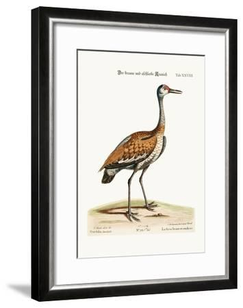 The Brown and Ash-Coloured Crane, 1749-73-George Edwards-Framed Giclee Print