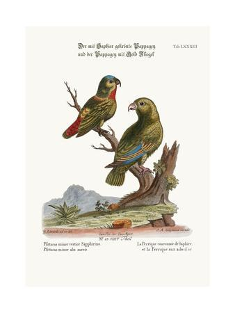 The Sapphire-Crowned Parrakeet, and the Golden-Winged Parrakeet, 1749-73-George Edwards-Premium Giclee Print