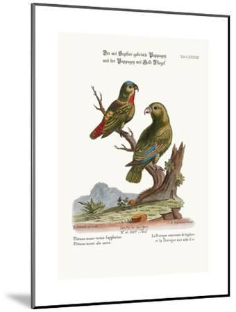 The Sapphire-Crowned Parrakeet, and the Golden-Winged Parrakeet, 1749-73-George Edwards-Mounted Giclee Print