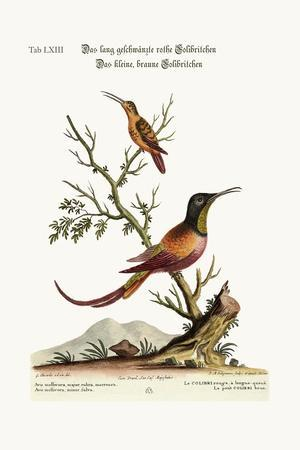 The Long-Tailed Red Hummingbird. the Little Brown Hummingbird, 1749-73-George Edwards-Stretched Canvas Print