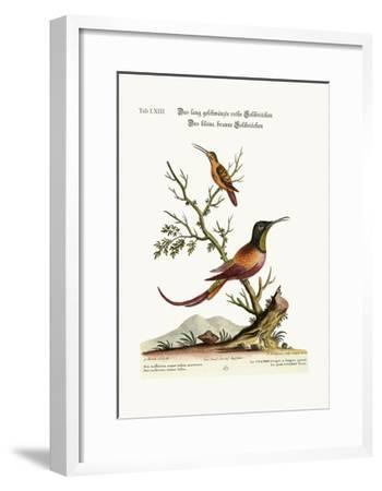 The Long-Tailed Red Hummingbird. the Little Brown Hummingbird, 1749-73-George Edwards-Framed Giclee Print