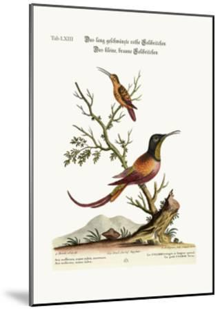 The Long-Tailed Red Hummingbird. the Little Brown Hummingbird, 1749-73-George Edwards-Mounted Giclee Print