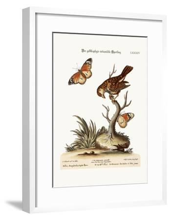 The Yellow-Headed Indian Sparrow, 1749-73-George Edwards-Framed Giclee Print