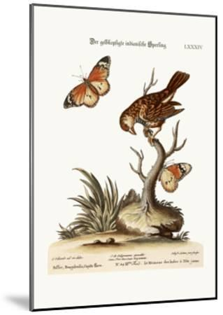 The Yellow-Headed Indian Sparrow, 1749-73-George Edwards-Mounted Giclee Print
