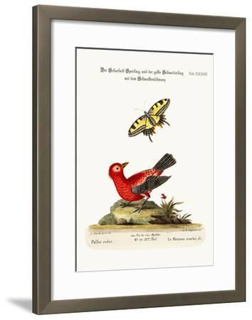 The Scarlet Sparrow and the Yellow Swallow-Tailed Butterfly, 1749-73-George Edwards-Framed Giclee Print