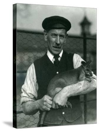 Keeper G. Blore Holding a Wallaby at London Zoo, October 1920-Frederick William Bond-Stretched Canvas Print
