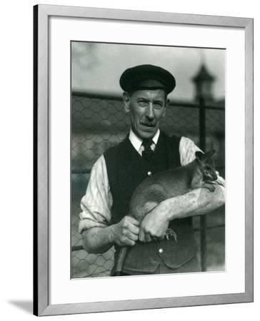 Keeper G. Blore Holding a Wallaby at London Zoo, October 1920-Frederick William Bond-Framed Premium Photographic Print