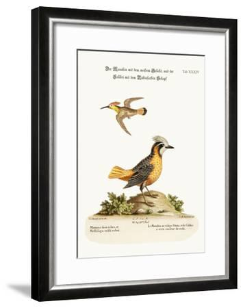 The White-Faced Manakin, and the Ruby-Crested Hummingbird, 1749-73-George Edwards-Framed Giclee Print