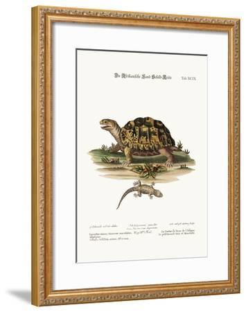 The African Land-Tortoise. the Small Spotted Grey Lizard, 1749-73-George Edwards-Framed Giclee Print