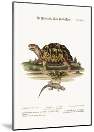 The African Land-Tortoise. the Small Spotted Grey Lizard, 1749-73-George Edwards-Mounted Giclee Print