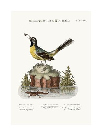 The Grey Water-Wagtail, and the Water Lizard, 1749-73-George Edwards-Framed Giclee Print