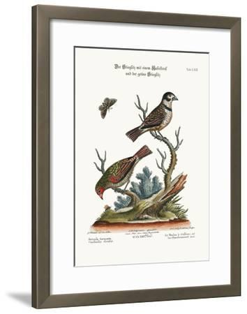 The Collared Finch, and the Green Goldfinch, 1749-73-George Edwards-Framed Giclee Print