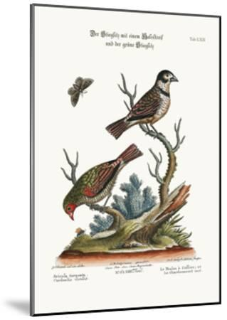 The Collared Finch, and the Green Goldfinch, 1749-73-George Edwards-Mounted Giclee Print