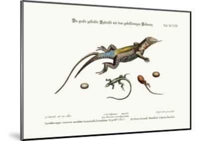 The Great Spotted Lizard with a Forked Tail, 1749-73-George Edwards-Mounted Giclee Print