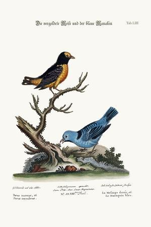 The Golden Tit-Mouse, and the Blue Manakin, 1749-73-George Edwards-Stretched Canvas Print