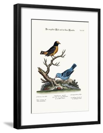 The Golden Tit-Mouse, and the Blue Manakin, 1749-73-George Edwards-Framed Giclee Print