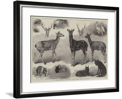 New Animals and Birds in the Zoological Society's Gardens, Regent's Park-Friedrich Wilhelm Keyl-Framed Giclee Print
