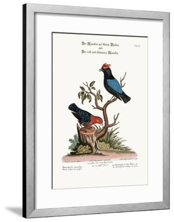 The Blue-Backed Manakin, and the Red and Black Manakin, 1749-73-George Edwards-Framed Giclee Print