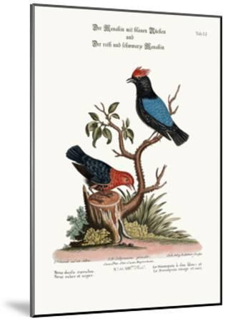 The Blue-Backed Manakin, and the Red and Black Manakin, 1749-73-George Edwards-Mounted Giclee Print
