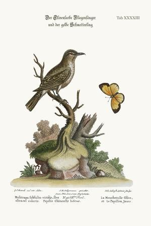 The Olive-Coloured Flycatcher and the Yellow Butterfly, 1749-73-George Edwards-Stretched Canvas Print