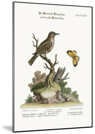 The Olive-Coloured Flycatcher and the Yellow Butterfly, 1749-73-George Edwards-Mounted Giclee Print