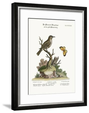 The Olive-Coloured Flycatcher and the Yellow Butterfly, 1749-73-George Edwards-Framed Giclee Print