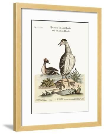 The Black and White Dobchick and the Eared Dobchick, 1749-73-George Edwards-Framed Giclee Print
