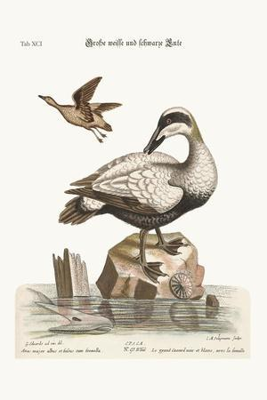 The Great Black and White Duck, 1749-73-George Edwards-Stretched Canvas Print