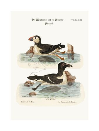 The Puffin, and the Razor-Bill, 1749-73-George Edwards-Giclee Print