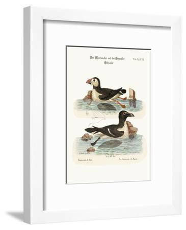The Puffin, and the Razor-Bill, 1749-73-George Edwards-Framed Giclee Print