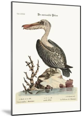 The Pelican of America, 1749-73-George Edwards-Mounted Giclee Print