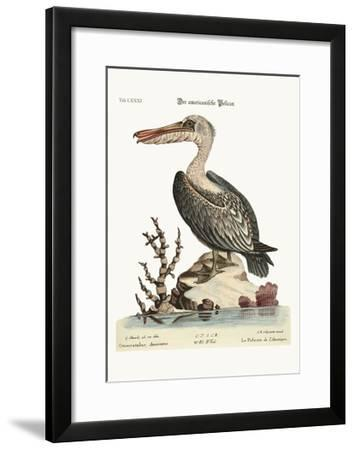 The Pelican of America, 1749-73-George Edwards-Framed Giclee Print