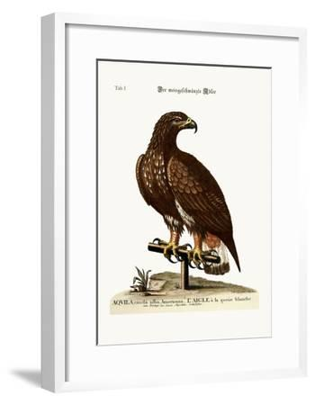 The White-Tailed Eagle, 1749-73-George Edwards-Framed Giclee Print