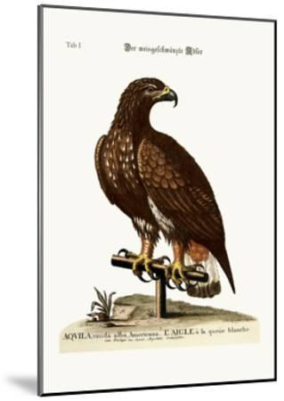 The White-Tailed Eagle, 1749-73-George Edwards-Mounted Giclee Print
