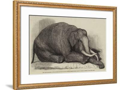 The Dead Elephant at the Gardens of the Zoological Society, Regent'S-Park-George Landseer-Framed Giclee Print