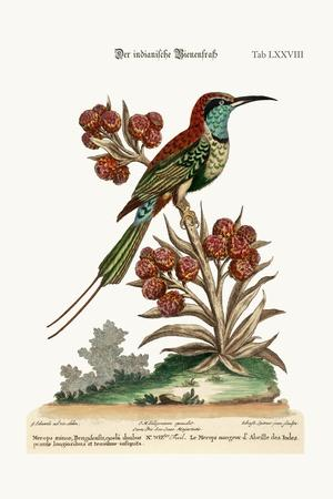 The Indian Bee-Eater, 1749-73-George Edwards-Stretched Canvas Print