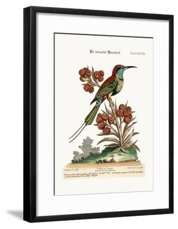 The Indian Bee-Eater, 1749-73-George Edwards-Framed Giclee Print