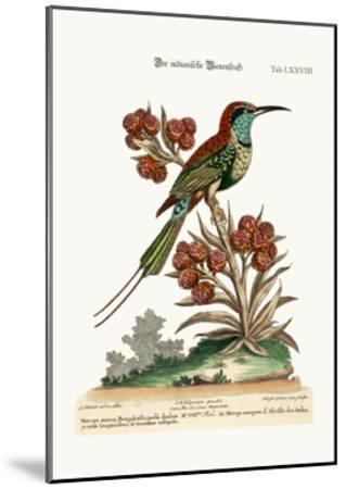 The Indian Bee-Eater, 1749-73-George Edwards-Mounted Giclee Print