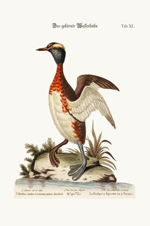 The Eared or Horned Dobchick, 1749-73-George Edwards-Stretched Canvas Print